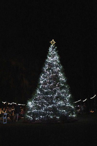 Archbold to host annual Tree of Lights