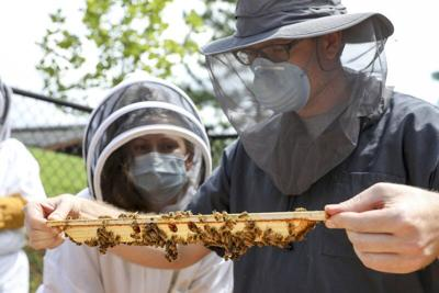 New beehives added for veterinary training