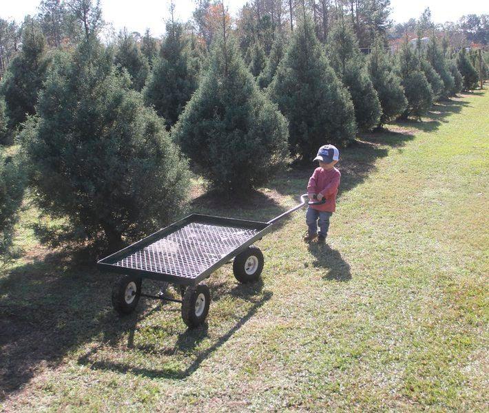 Wheeler's Christmas Tree Farm hopes a new tradition grows