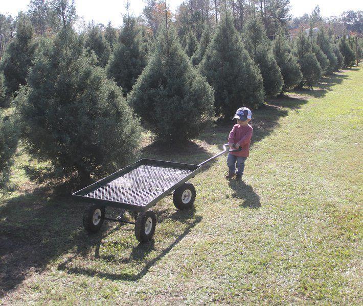Christmas Tree Farm Southern California: Wheeler's Christmas Tree Farm Hopes A New Tradition Grows