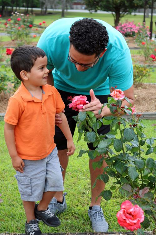 Thomasville Rose Garden features more than 1,500 bushes | Local News ...