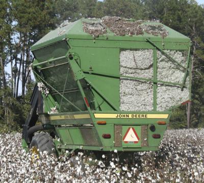 Market unkind to Georgia cotton farmers   News