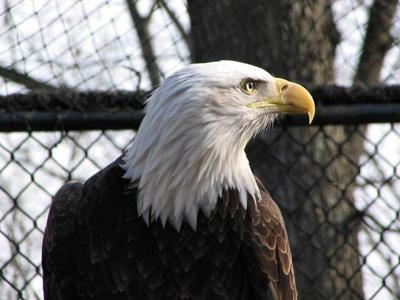 Nature Station seeks help naming animals