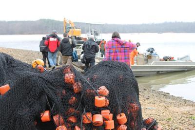 Economy the main drive to eradicate Asian carp