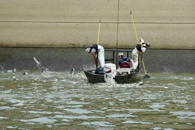 Bio-acoustic fish fence to aid Asian carp battle in lakes