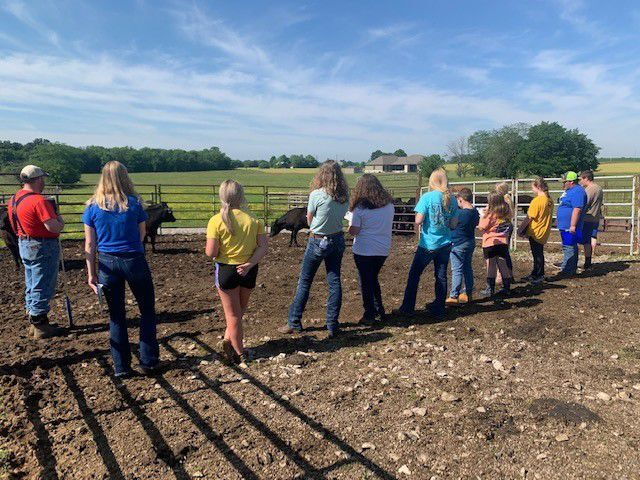 Local 4-Hers place in state livestock judging contest