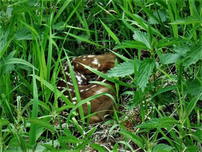 Delaying mowing as long as possible saves wildlife