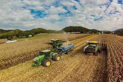 Harvest and dry remaining corn crop