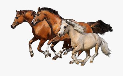 Horses 101 by Nan Edwards
