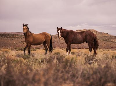 Horses 101