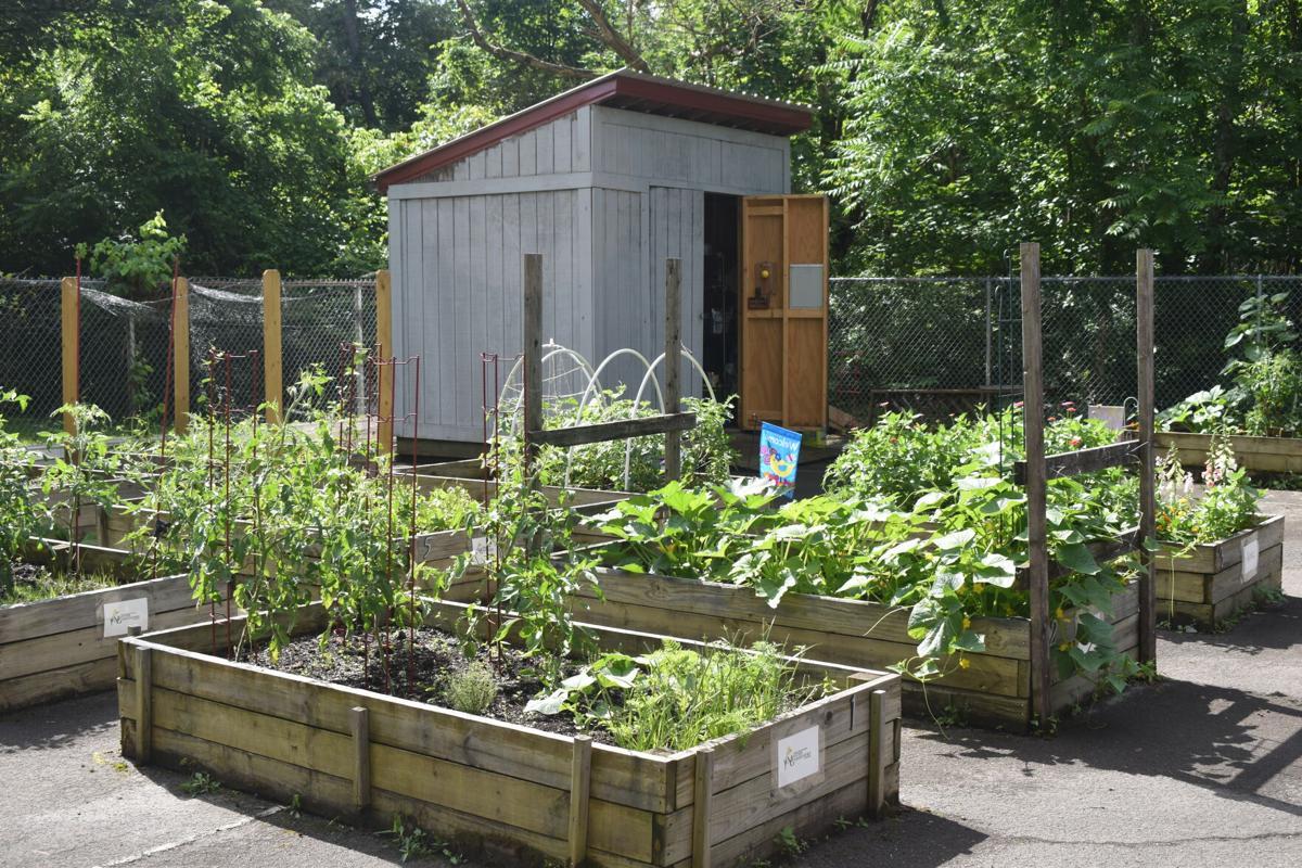 The garden plots