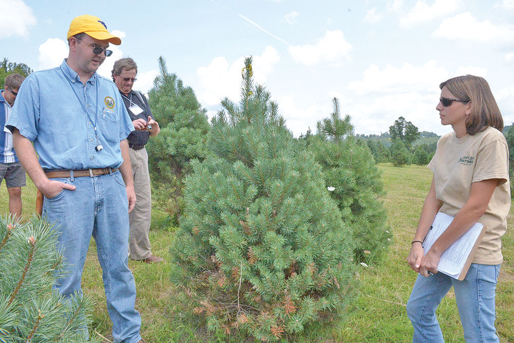 West Virginia Christmas Tree Growers Association returns to roots ...