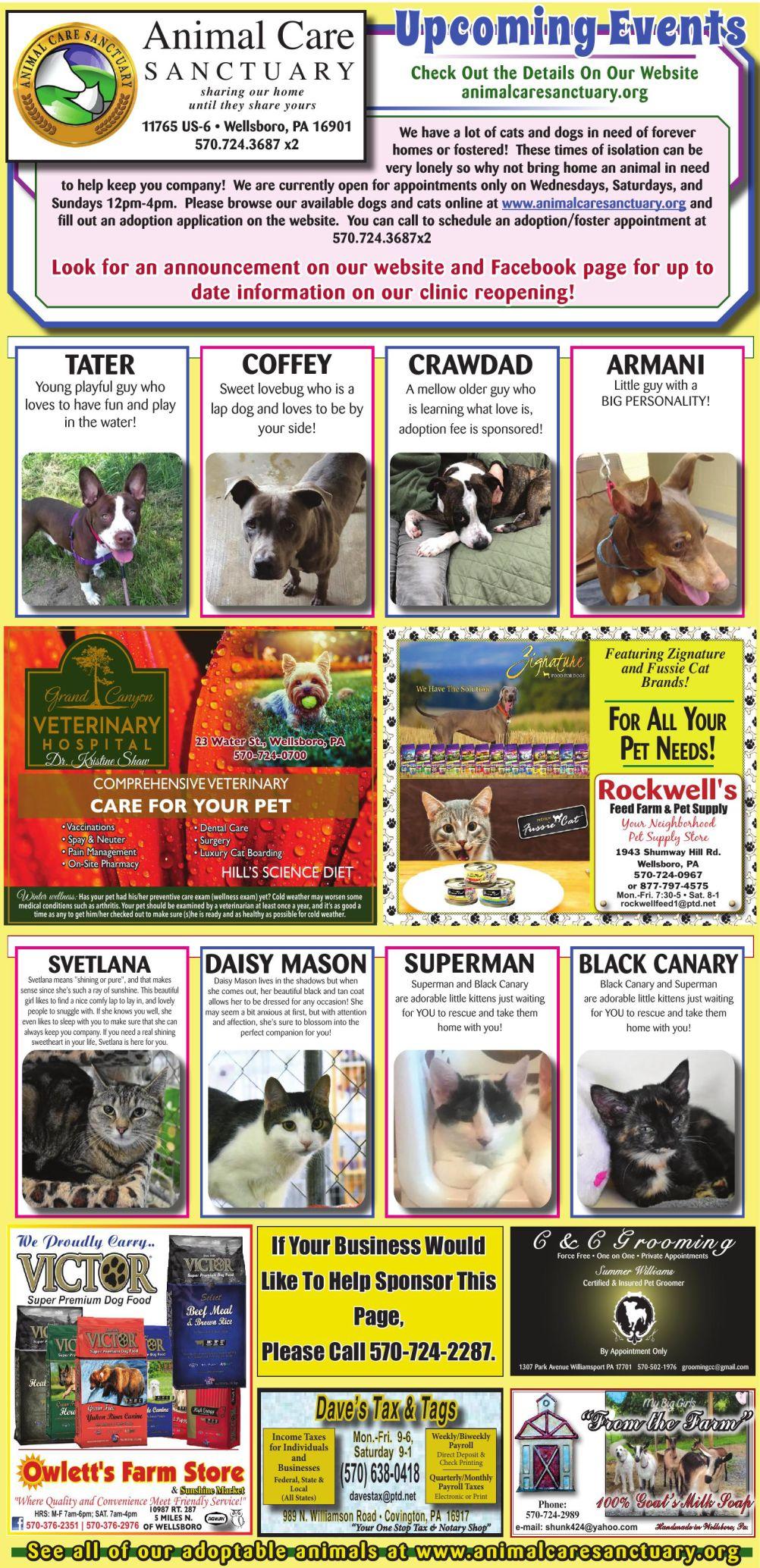 Wellsboro Pet Page.pdf