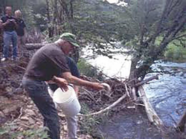 Babb Creek trout stocking