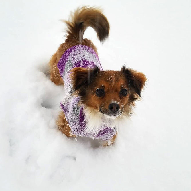 Protect pets in winter weather