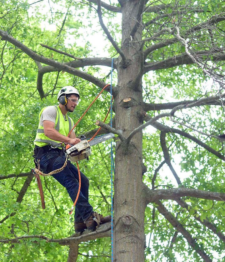 New tree service opens