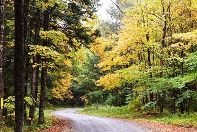 Fall foliage approaching peak