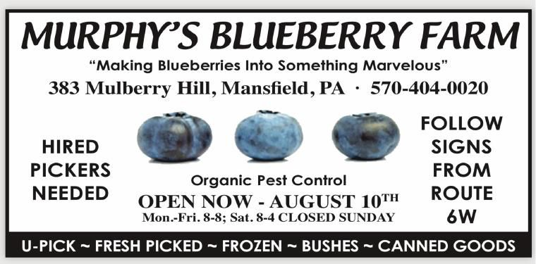 Murphy'sBlueberries.pdf