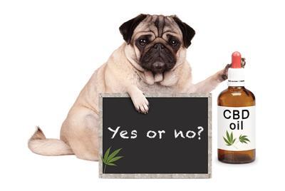 Pets CBD Oil