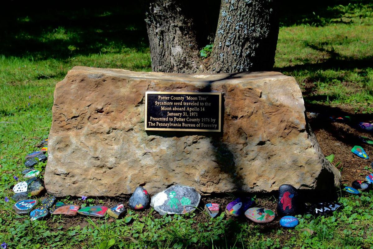 Ceremony honors Coudersport Moon Tree
