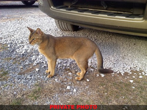 One Of The Photos Circulating On Inter Claiming To Show A Mountain Lion Killed In North Carolina