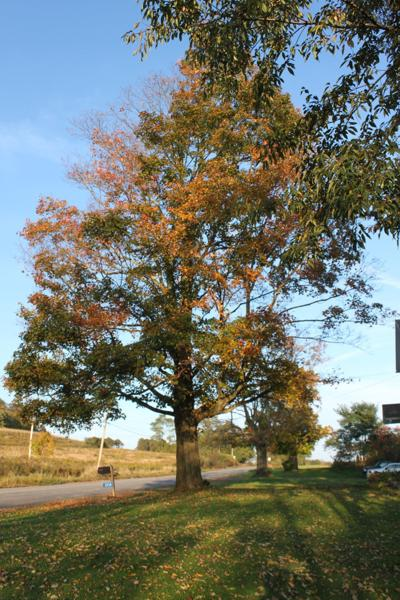 Rainy summer and fall likely to impact leaf peeping