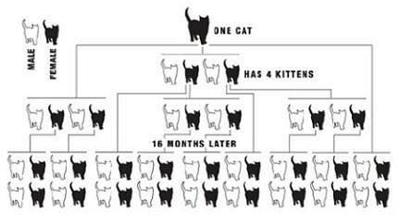 TNR program feral cat graphic