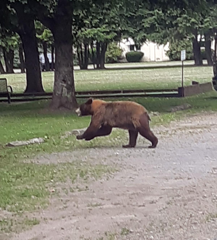 bear by library.jpg