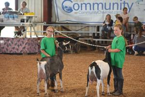 <p>Esther and Rebekah Harger, of Centerville, show their goats Dairy and Starla. The two were competing with their three other sisters at the fair.</p>