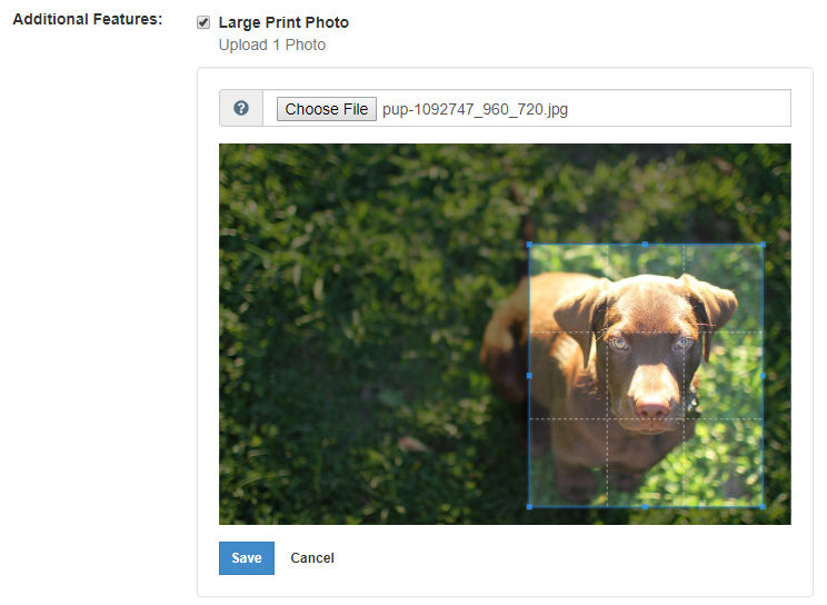 Creating a cropped image in BLOX Ad-Owl