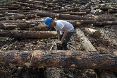 Threatened Owl Timber Projects