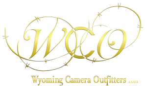 WCO_OfficialLogodotcom-300x176.png