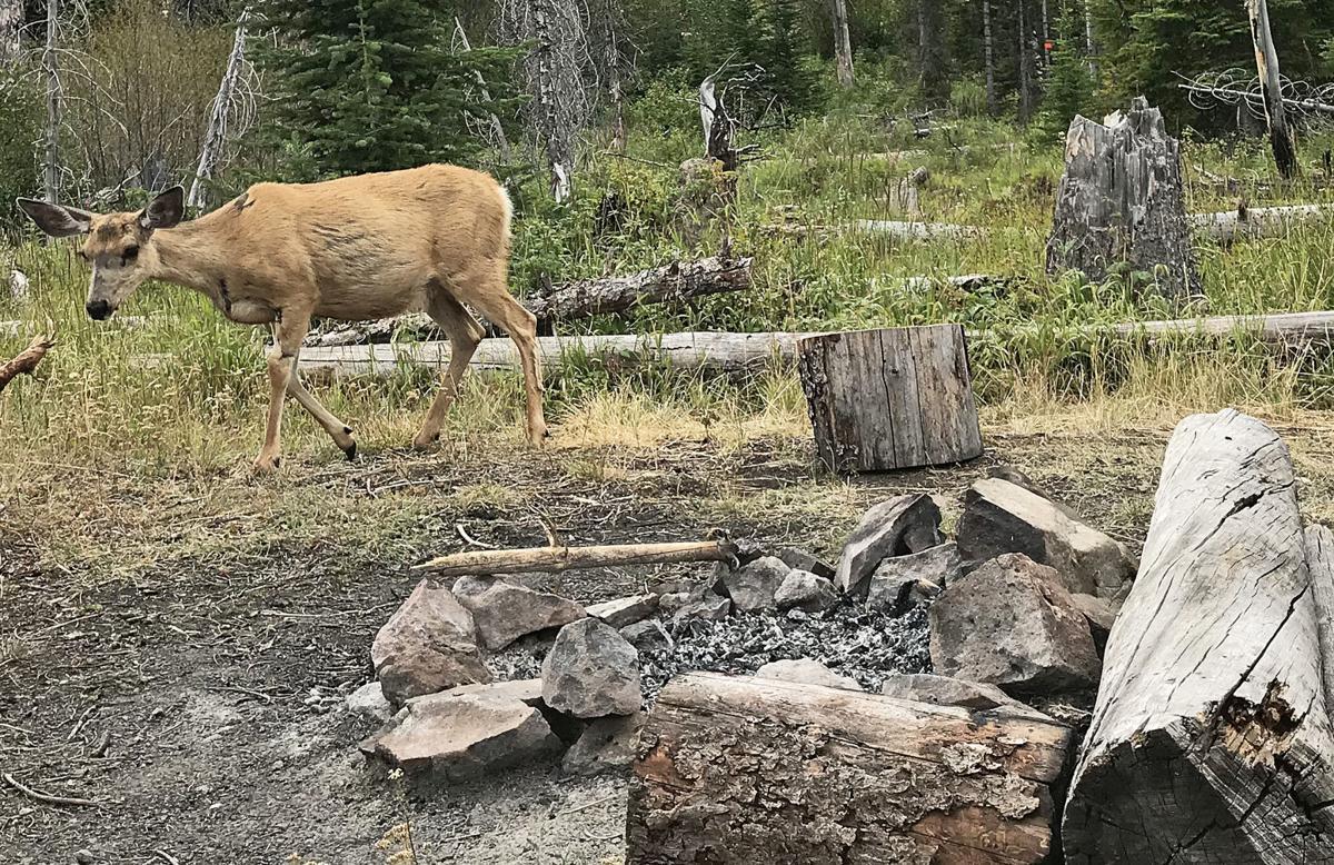 Camp visitor
