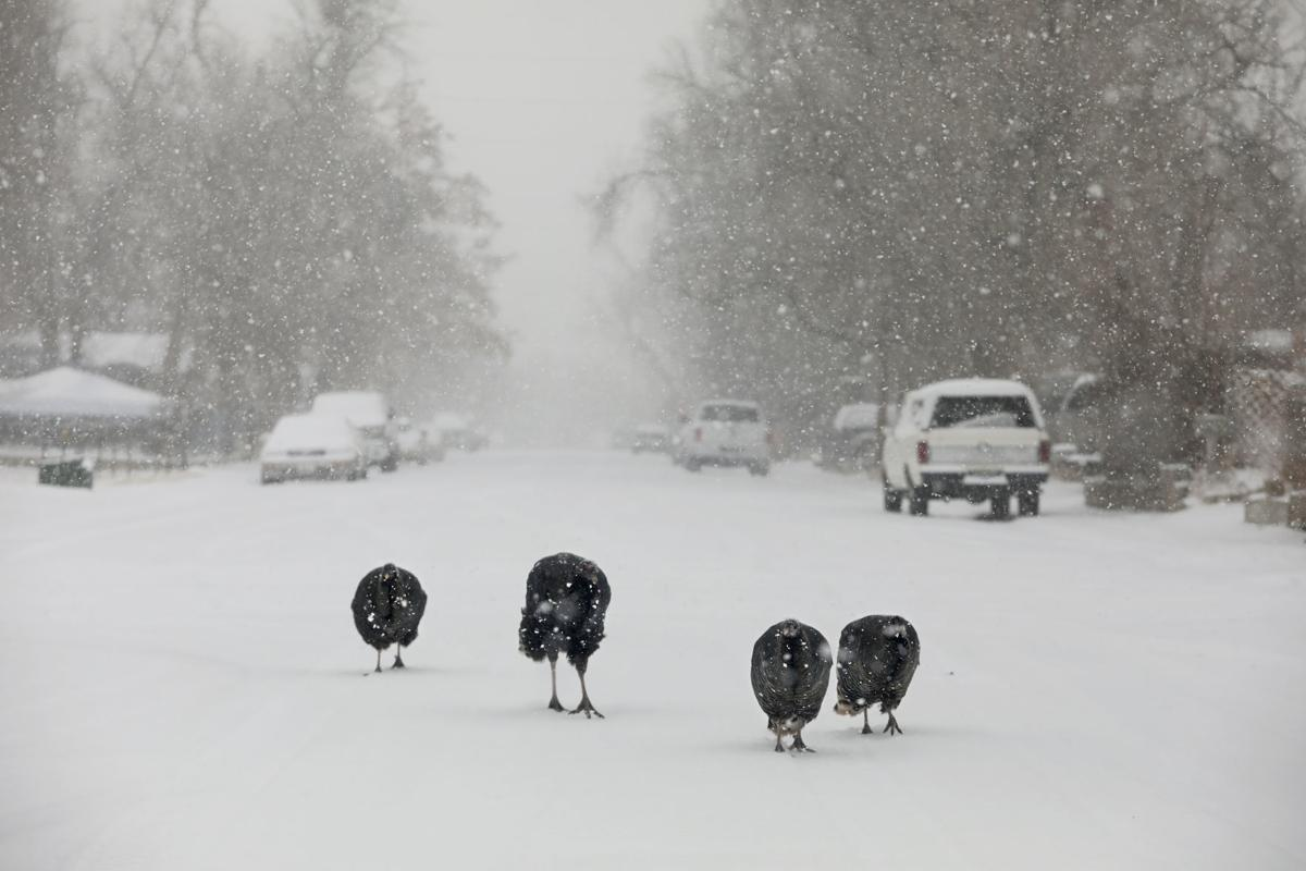 Snow Turkeys