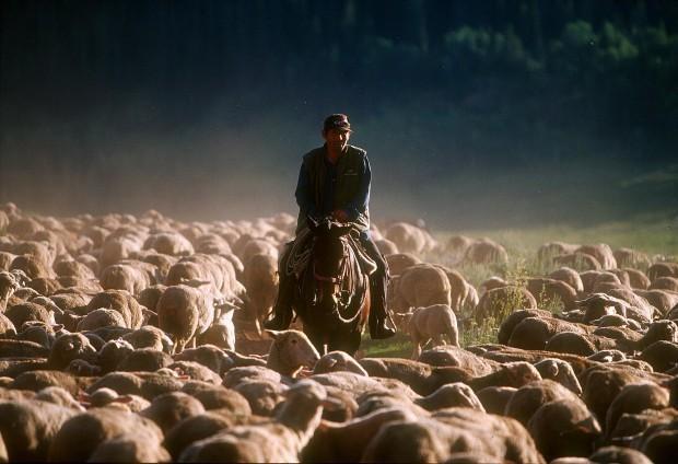 Gallery: Peruvian Sheepherders in Wyoming