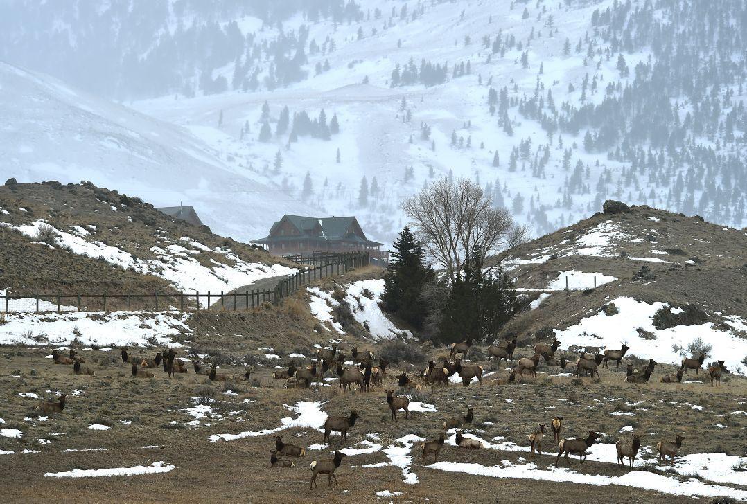 Elk up