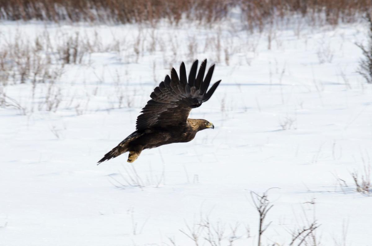 15 indicted in eagle trafficking case; more charges expected ...