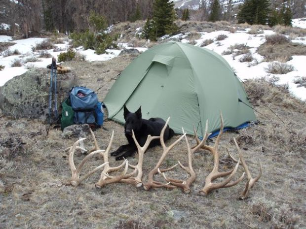 how to train a dog to hunt shed antlers