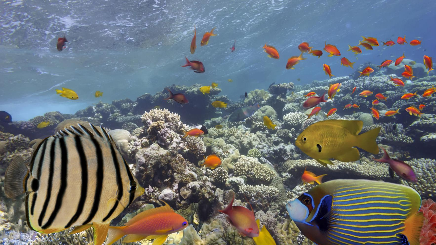 10 of the biggest threats to biodiversity, and why you should care