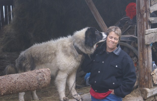 Wyoming couple looks to Old World dog breeds to protect livestock from wolves, bears