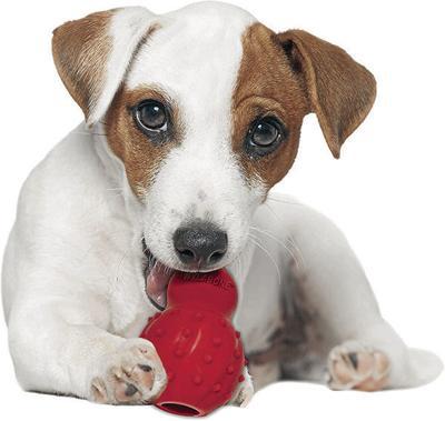 puppy_toy_CMYK.jpg