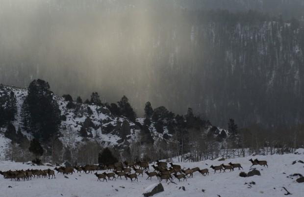 Elk testing project ends