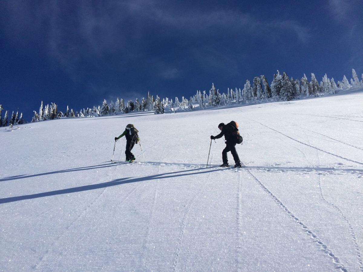 Skiing to wolverine camera site