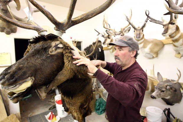 Old and New Taxidermy Techniques