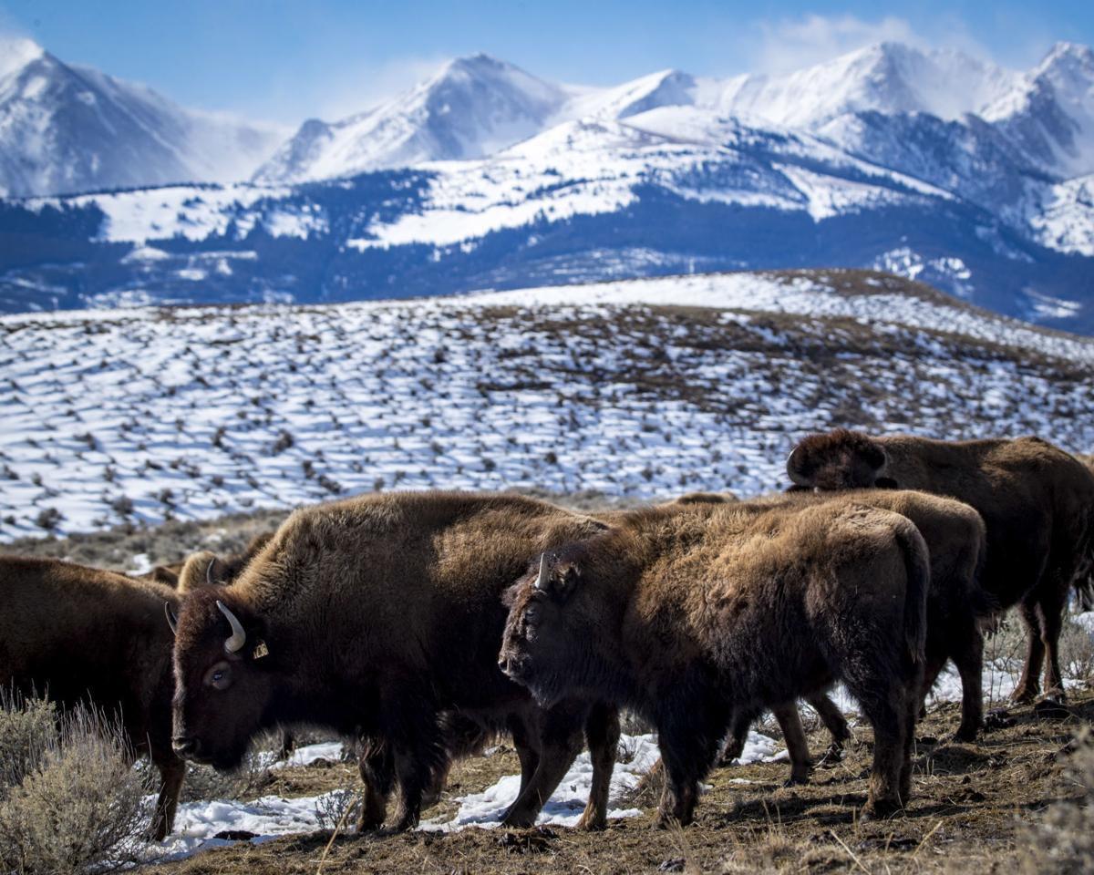 North Bridger Bison Ranch