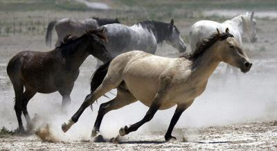 Official: Solving wild horse problem will take $5B, 15 years