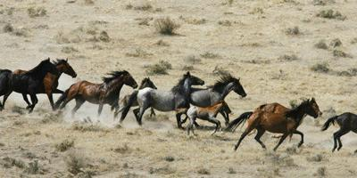 Lethal measures off table for controlling wild horse herds