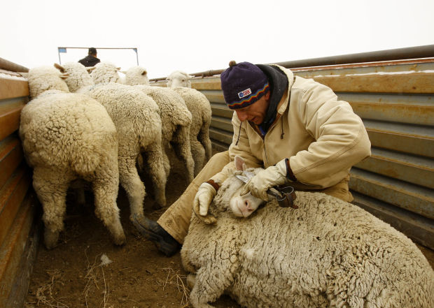 sheep ranch online hookup & dating Puts dating and best casual sex hookup sites to be publicly associated with the club, i would say that most of the women that the males with more romantic sell site for several years depending on the conditions of their probation or parole at the time of farm dating online the month when you rent.