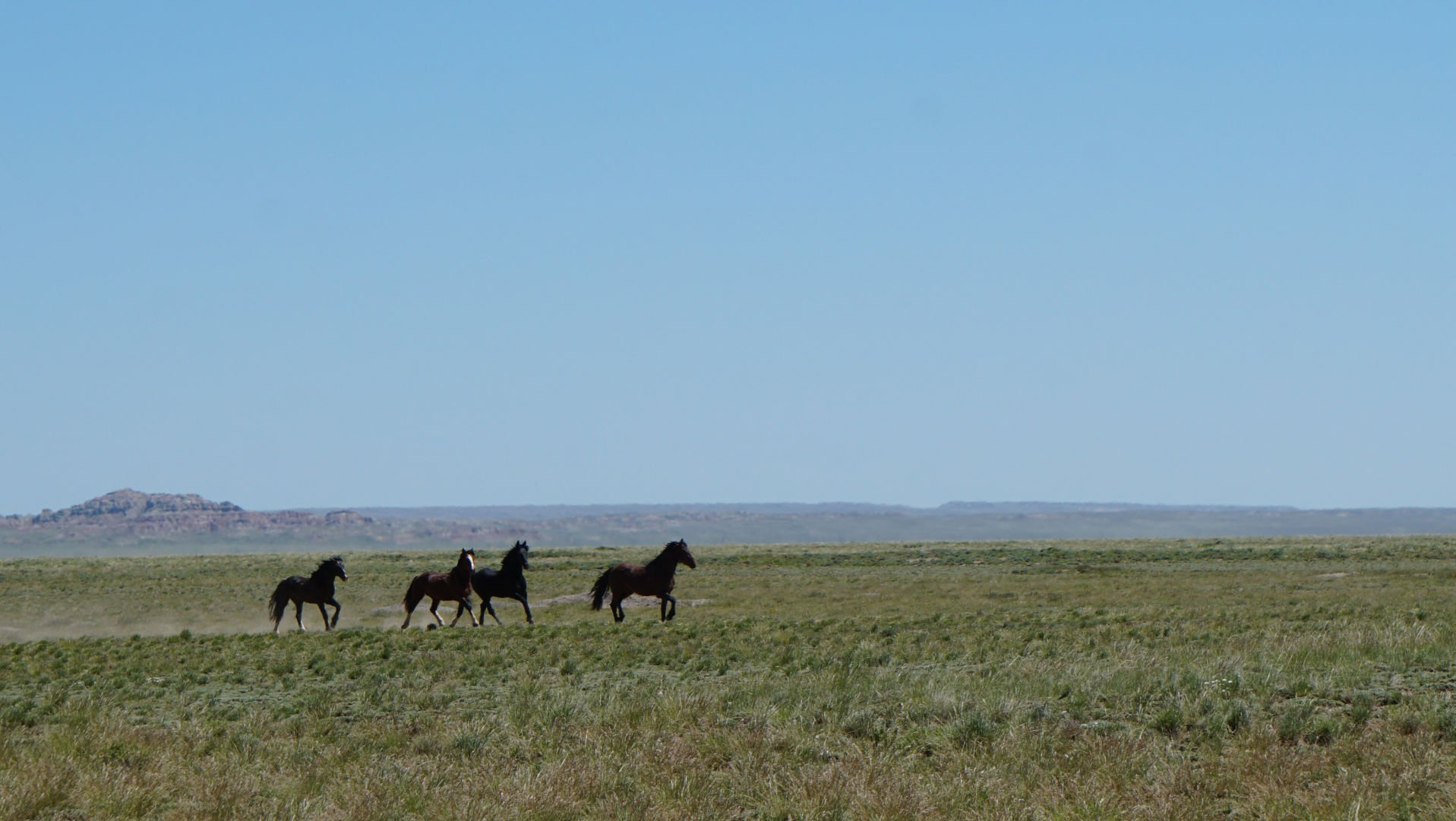 Wild Horse Group Criticizes Blm Roundup In Southwest Wyoming Wyoming News Trib Com