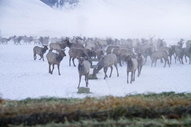 Elk Feedgrounds (copy)